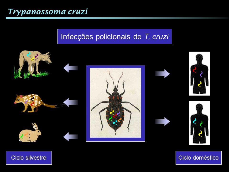 Infecções policlonais de T. cruzi