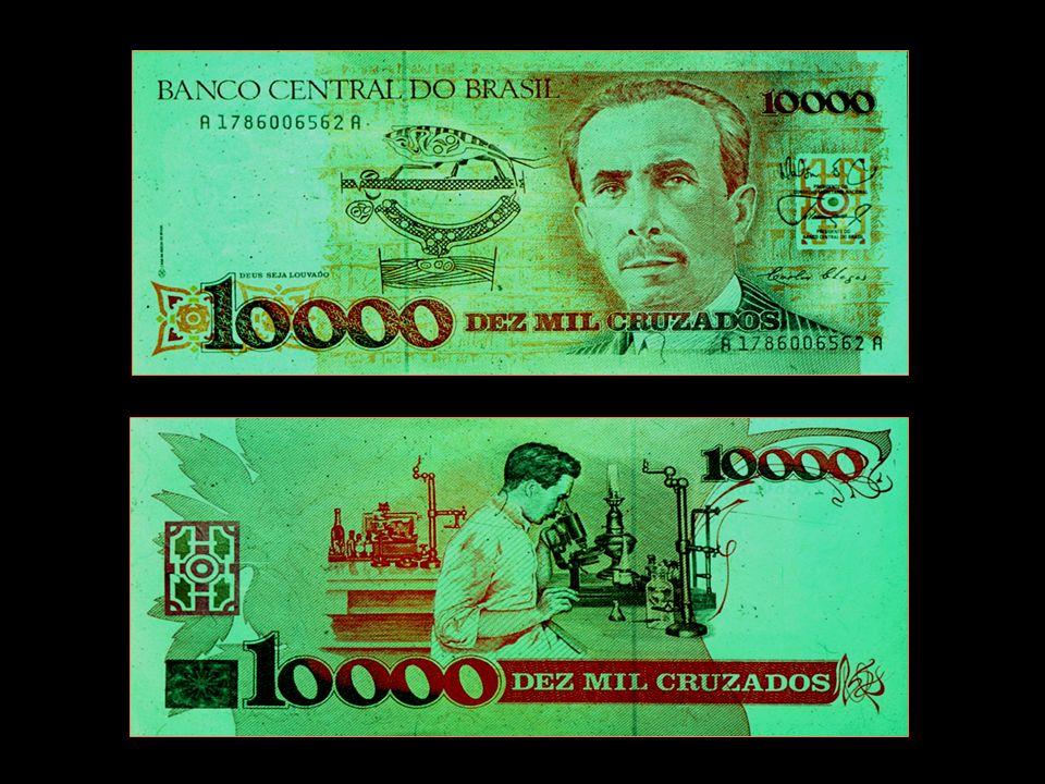A doença de Chagas foi descrita em 1909 por um grande cientista brasileiro, Carlos Justiniano Chagas, que quase ganhou o prêmio Nobel.
