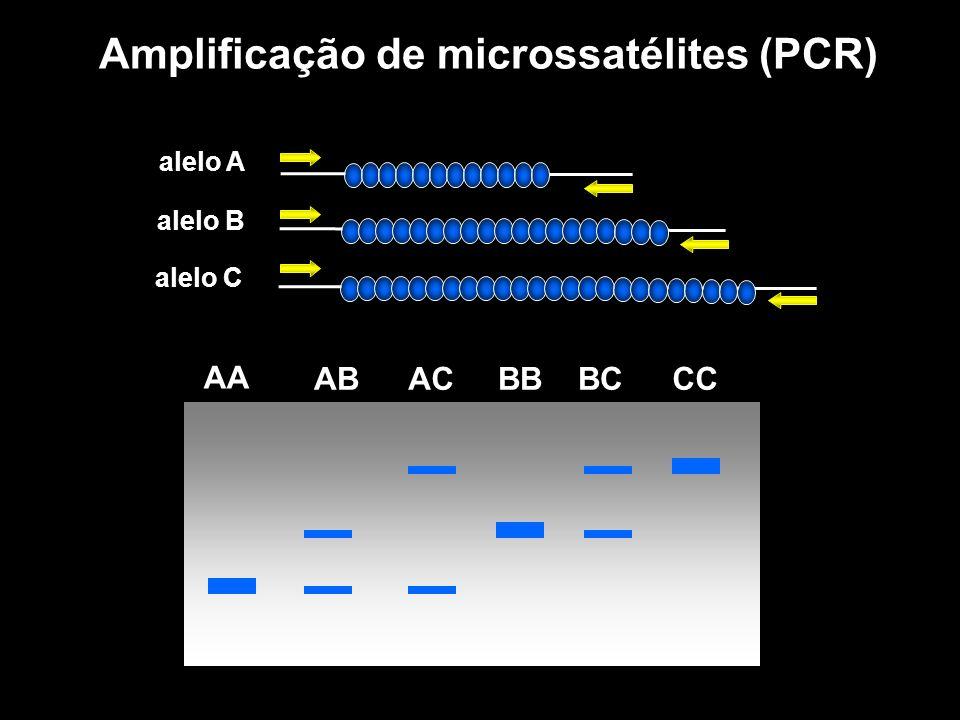 Amplificação de microssatélites (PCR)