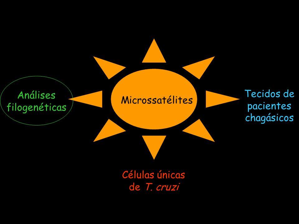 Análises filogenéticas Tecidos de pacientes chagásicos Microssatélites