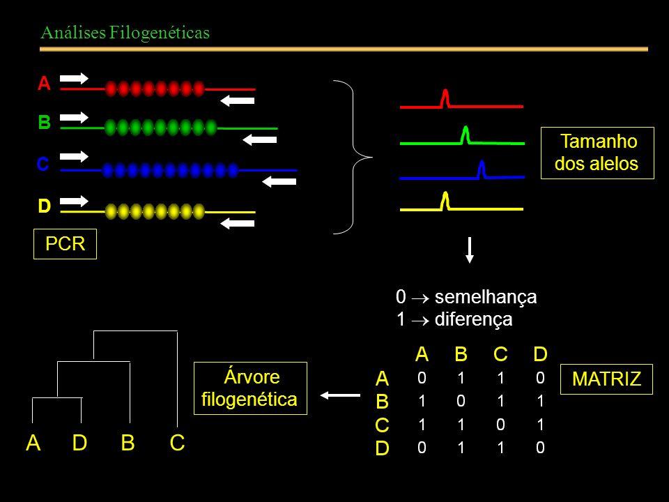 A D B C Análises Filogenéticas A B Tamanho dos alelos C D PCR
