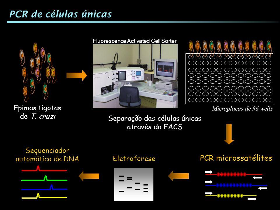 PCR de células únicas PCR microssatélites Epimas tigotas de T. cruzi