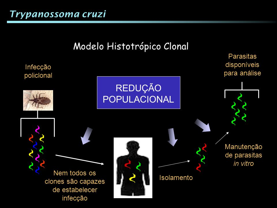 Modelo Histotrópico Clonal