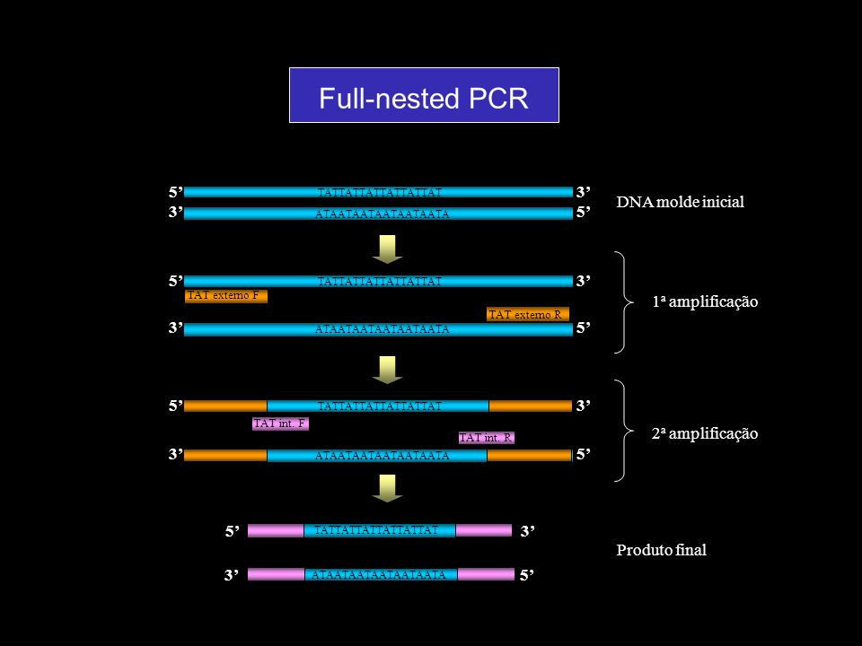 Full-nested PCR 5' 3' DNA molde inicial 1a amplificação