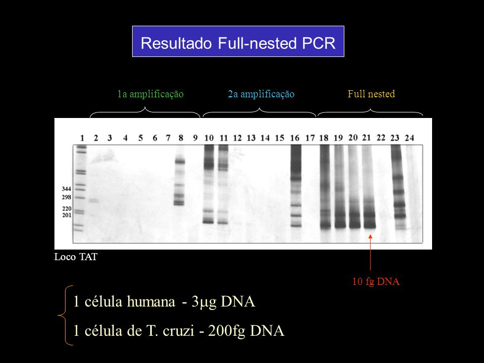 Resultado Full-nested PCR