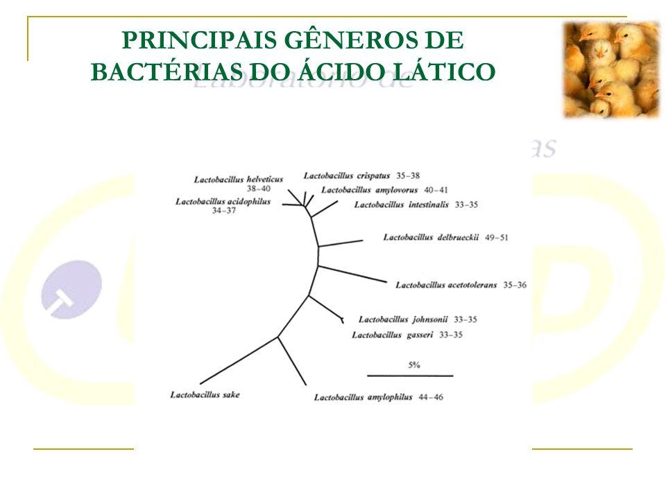 PRINCIPAIS GÊNEROS DE BACTÉRIAS DO ÁCIDO LÁTICO