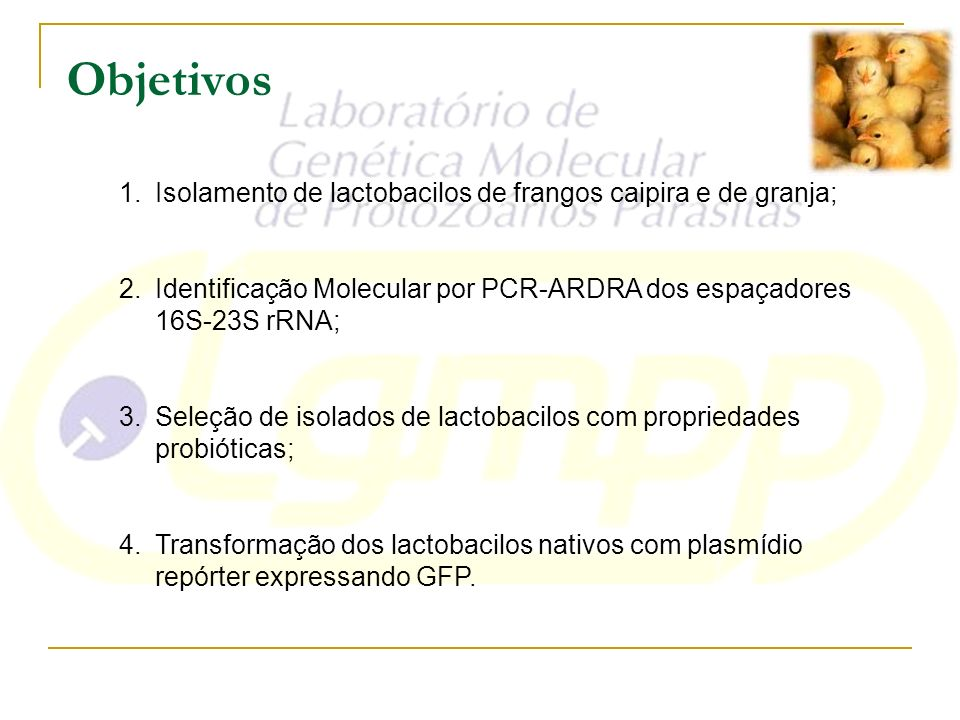 Objetivos Isolamento de lactobacilos de frangos caipira e de granja;