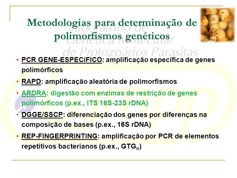 Metodologias para determinação de polimorfismos genéticos