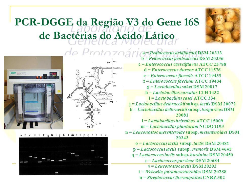 PCR-DGGE da Região V3 do Gene 16S de Bactérias do Ácido Lático