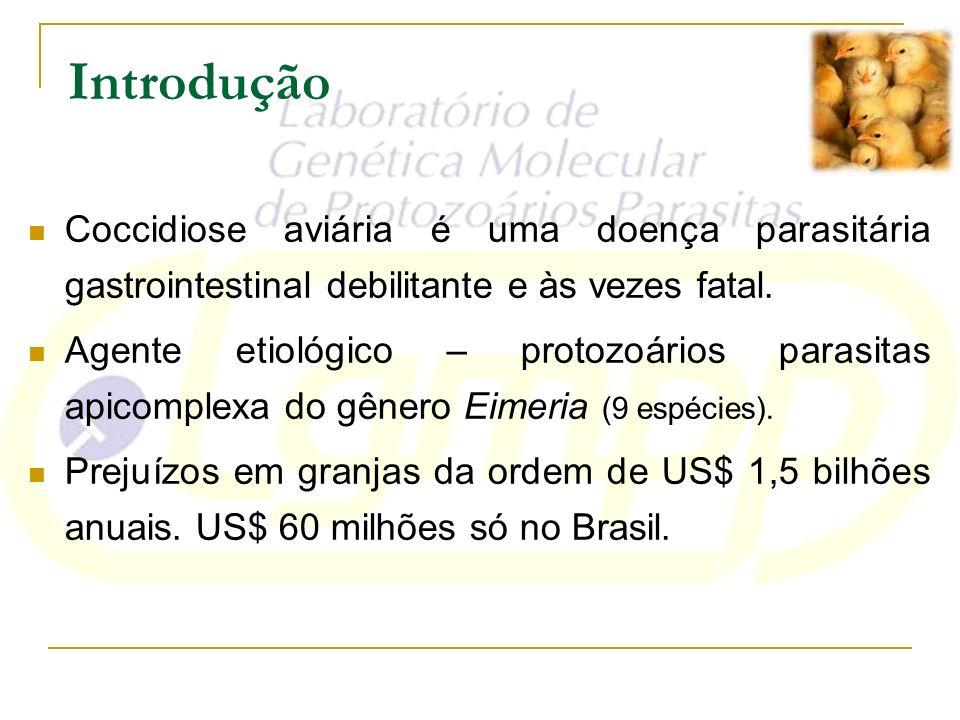 IntroduçãoCoccidiose aviária é uma doença parasitária gastrointestinal debilitante e às vezes fatal.