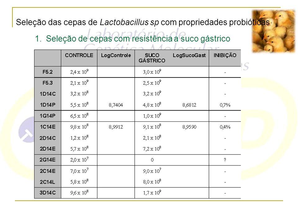 Seleção das cepas de Lactobacillus sp com propriedades probióticas