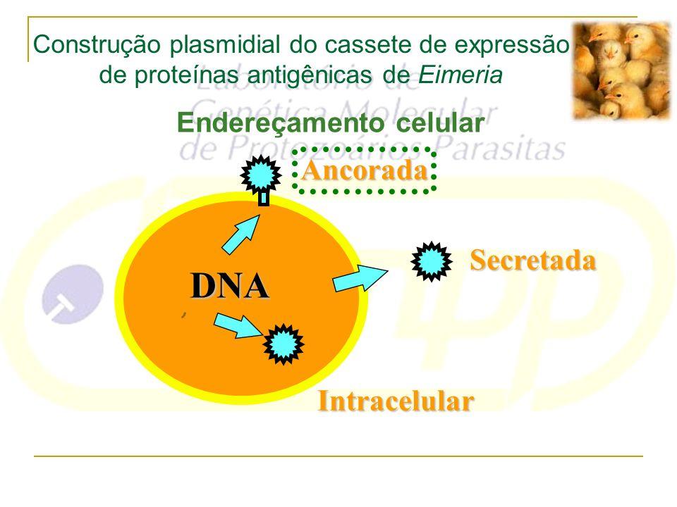 Endereçamento celular