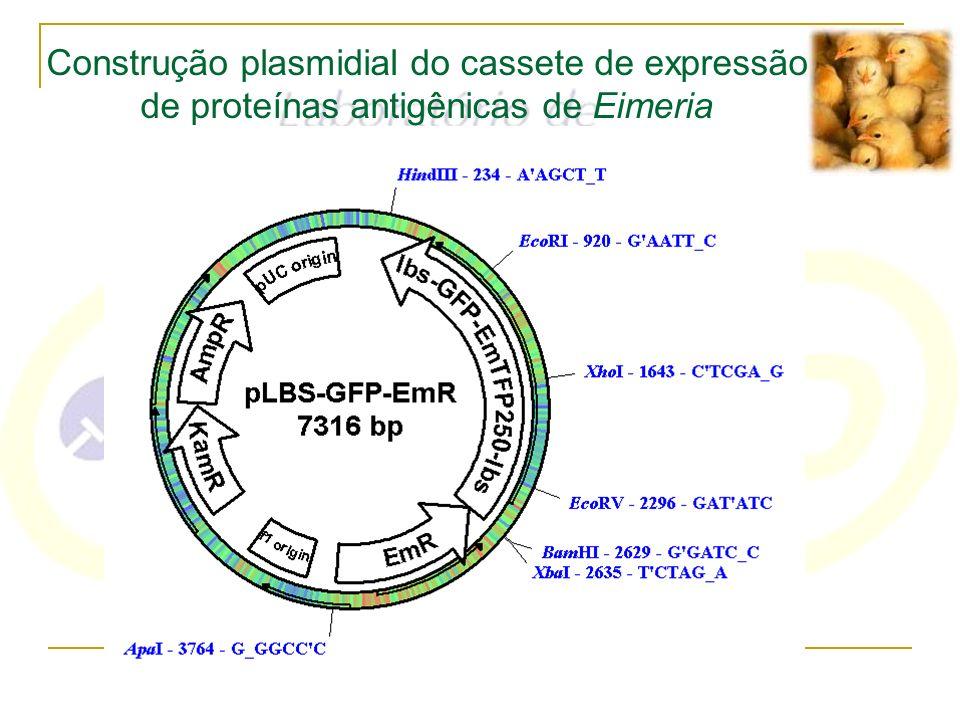 Construção plasmidial do cassete de expressão de proteínas antigênicas de Eimeria
