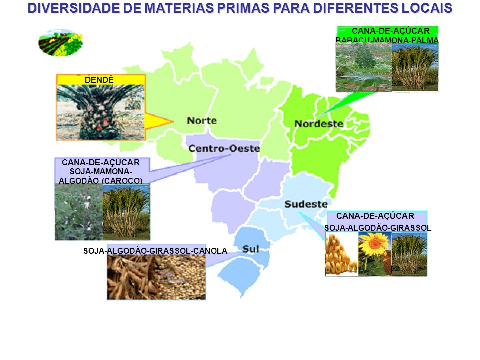 DIVERSIDADE DE MATERIAS PRIMAS PARA DIFERENTES LOCAIS