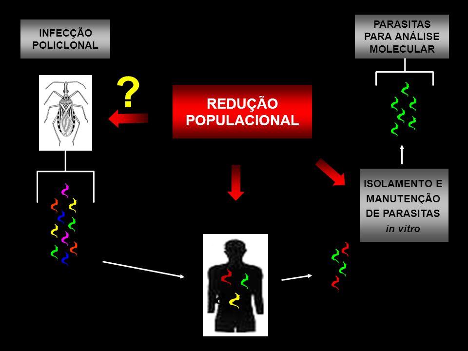 REDUÇÃO POPULACIONAL PARASITAS INFECÇÃO PARA ANÁLISE POLICLONAL