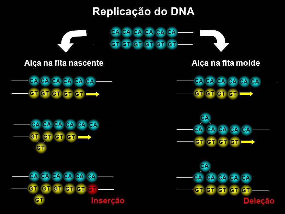 Replicação do DNA Alça na fita molde Alça na fita nascente Inserção