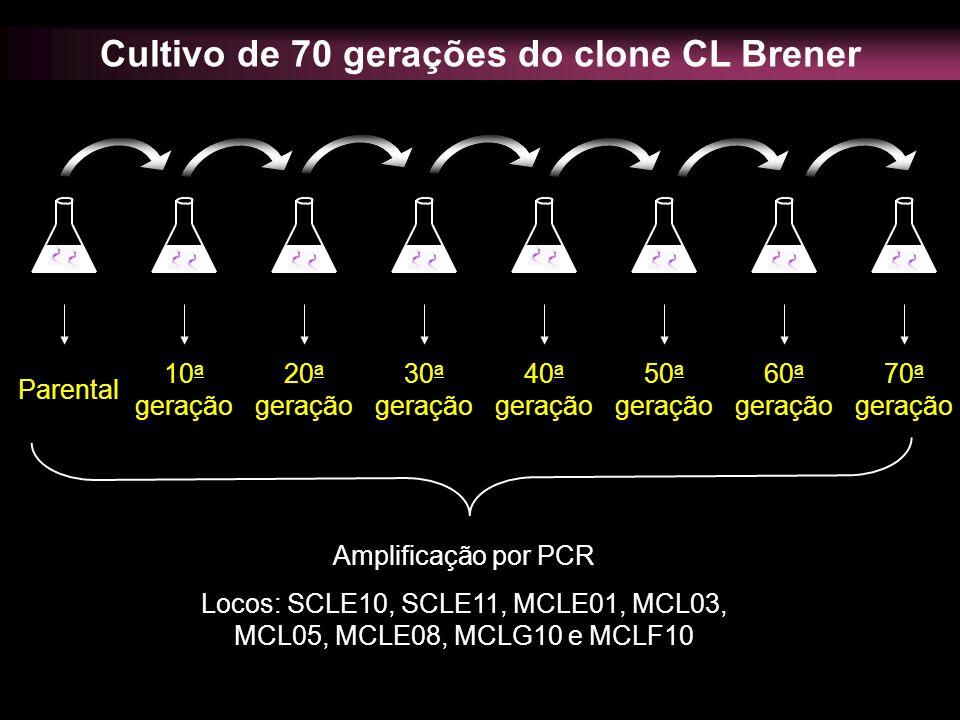 Cultivo de 70 gerações do clone CL Brener