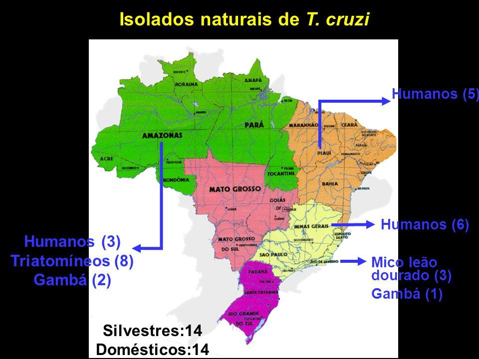 Isolados naturais de T. cruzi