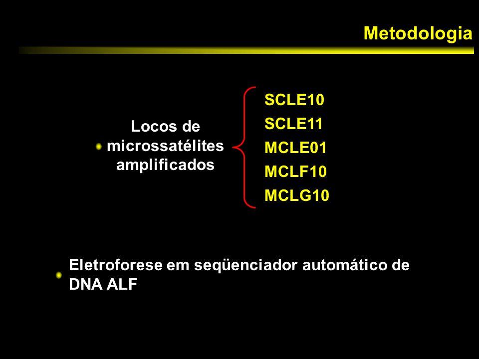 Locos de microssatélites amplificados