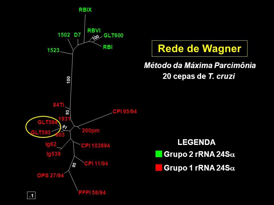 Rede de Wagner Método da Máxima Parcimônia 20 cepas de T. cruzi