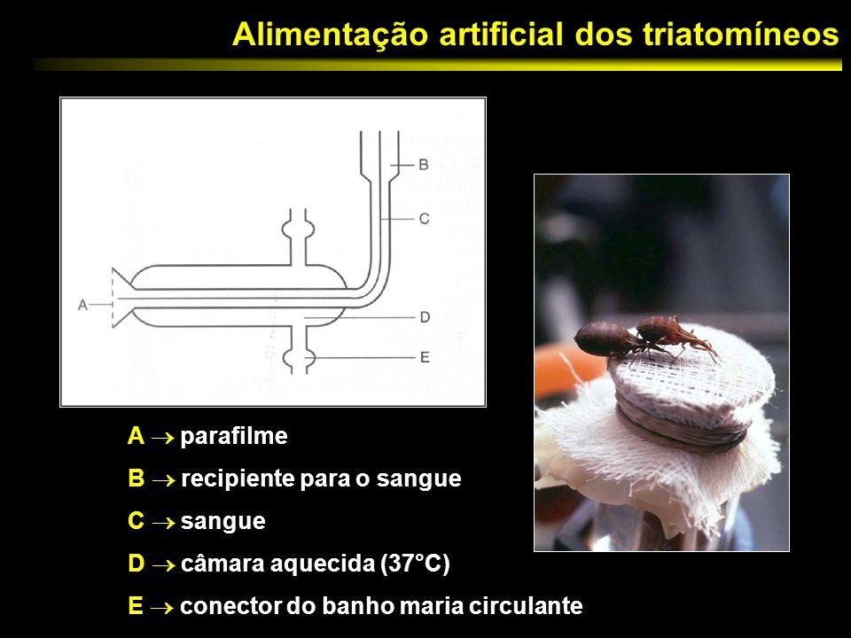 Alimentação artificial dos triatomíneos