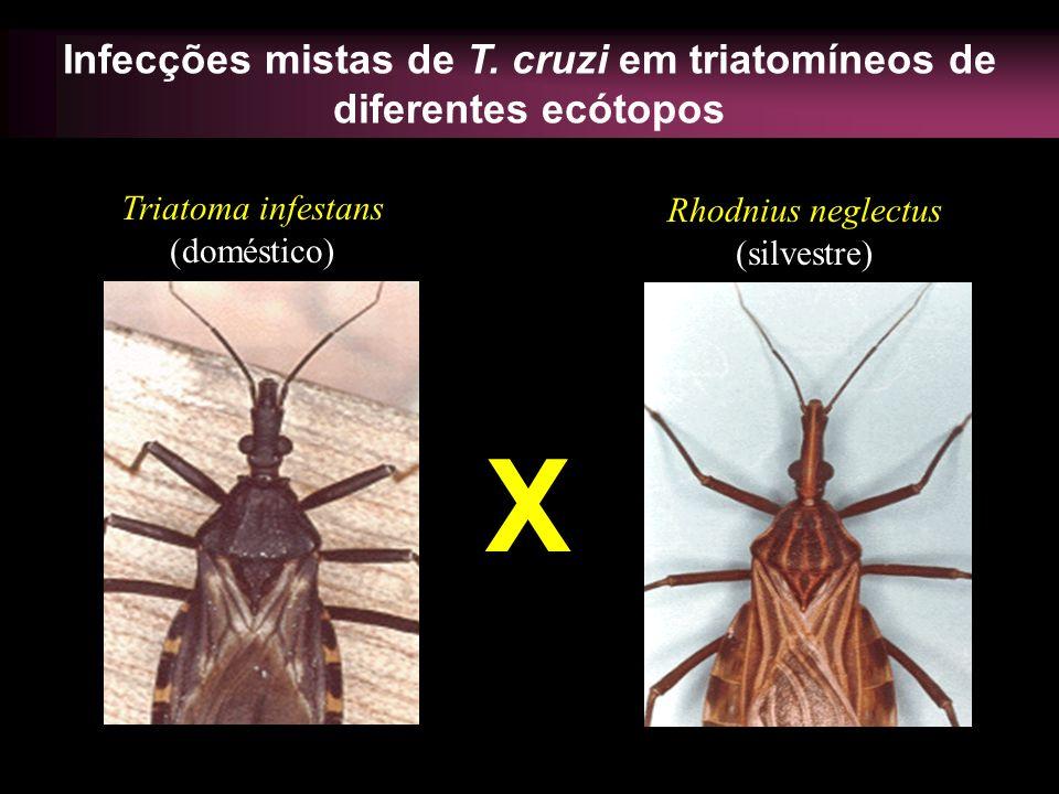 Infecções mistas de T. cruzi em triatomíneos de diferentes ecótopos