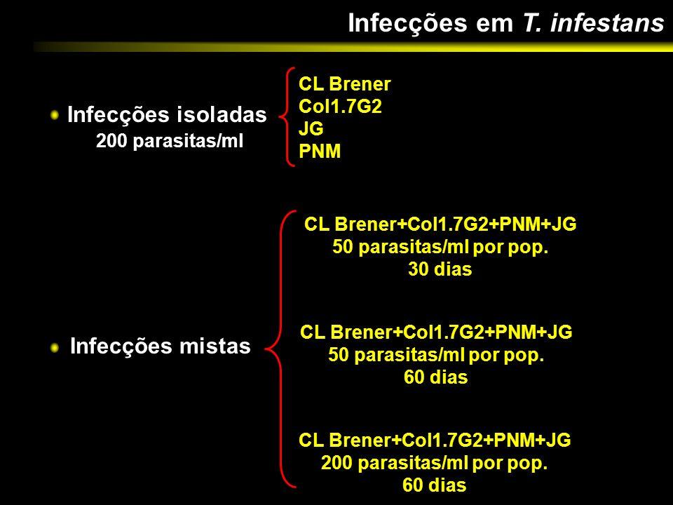 Infecções em T. infestans