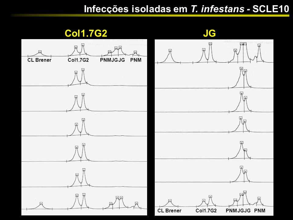 Infecções isoladas em T. infestans - SCLE10