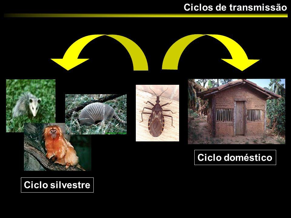 Ciclos de transmissão Ciclo doméstico Ciclo silvestre