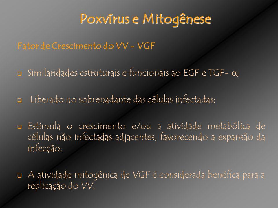 Poxvírus e Mitogênese Fator de Crescimento do VV - VGF