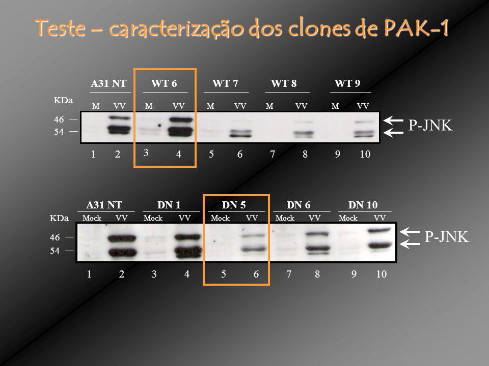 Teste – caracterização dos clones de PAK-1