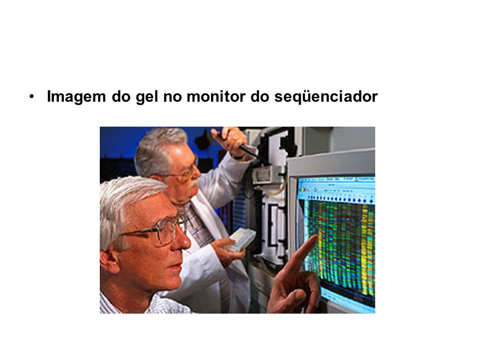 Imagem do gel no monitor do seqüenciador