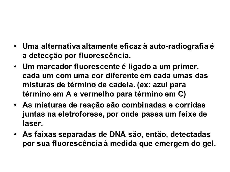 Uma alternativa altamente eficaz à auto-radiografia é a detecção por fluorescência.