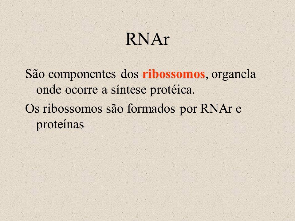 RNAr São componentes dos ribossomos, organela onde ocorre a síntese protéica.