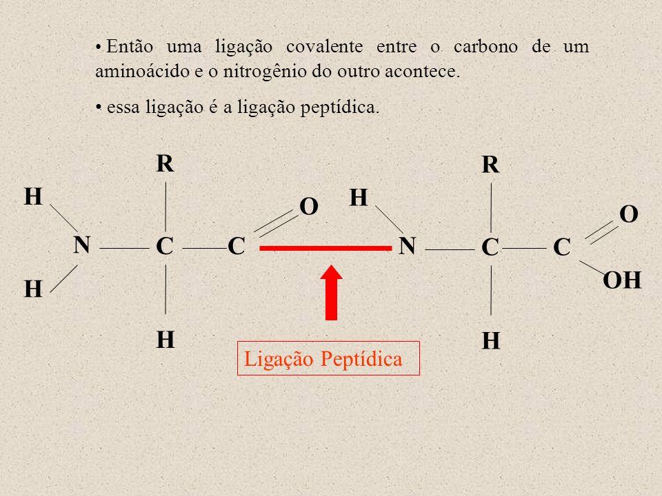 R R H H O O N C C N C C OH H H H Ligação Peptídica