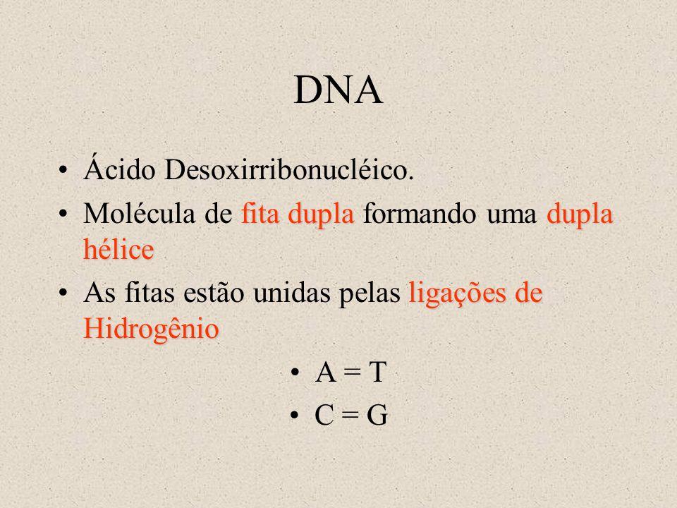DNA Ácido Desoxirribonucléico.