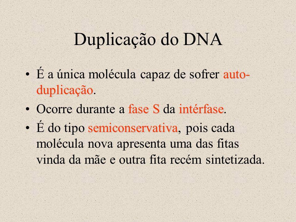 Duplicação do DNA É a única molécula capaz de sofrer auto-duplicação.