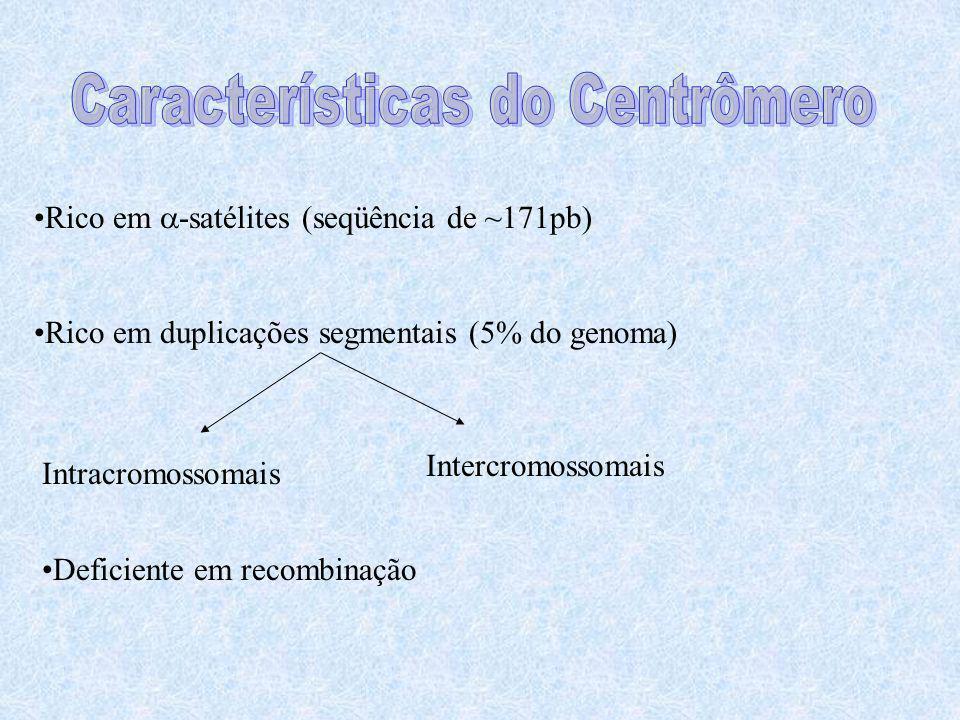 Características do Centrômero