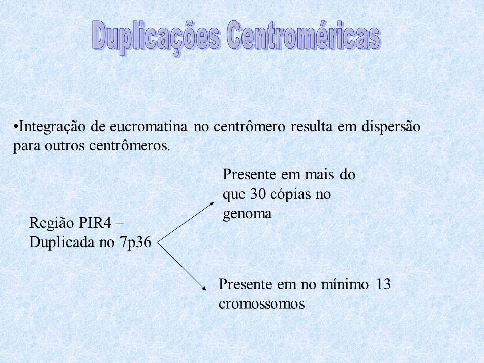 Duplicações Centroméricas