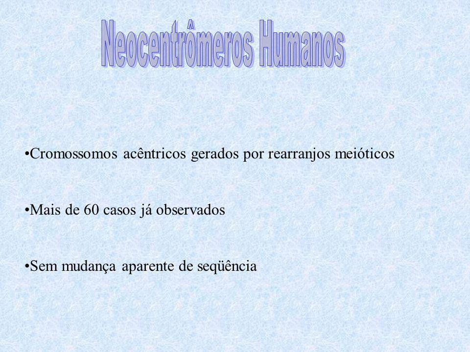 Neocentrômeros Humanos