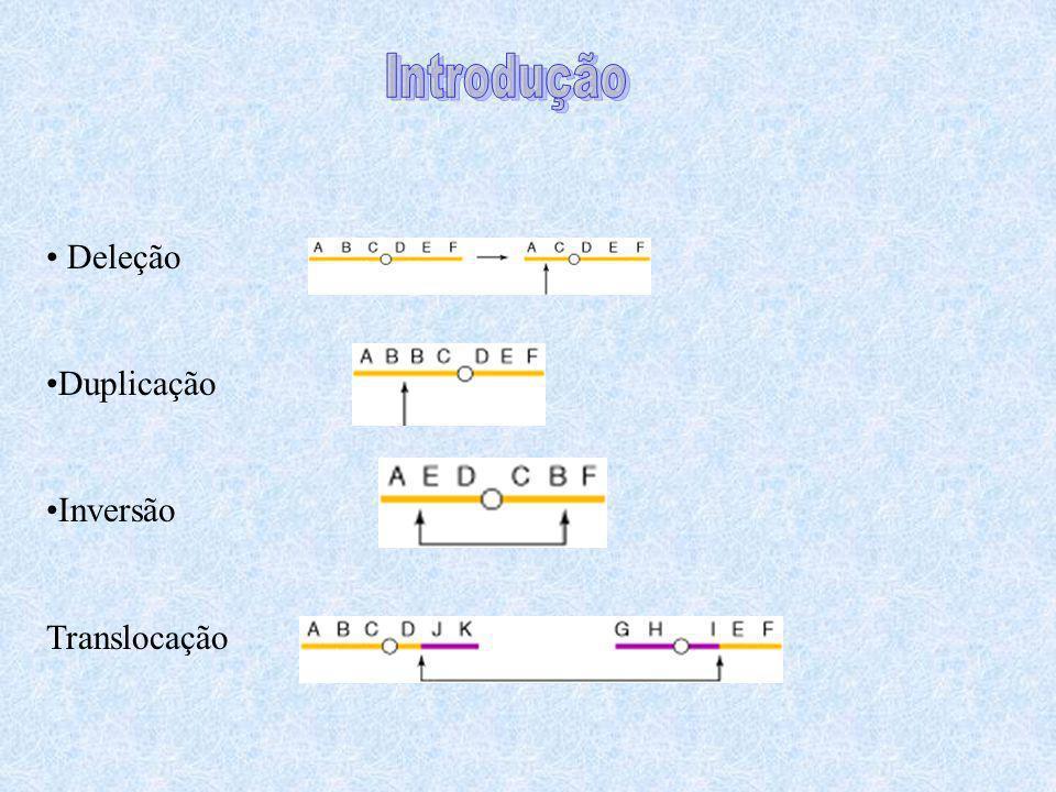 Introdução Deleção Duplicação Inversão Translocação