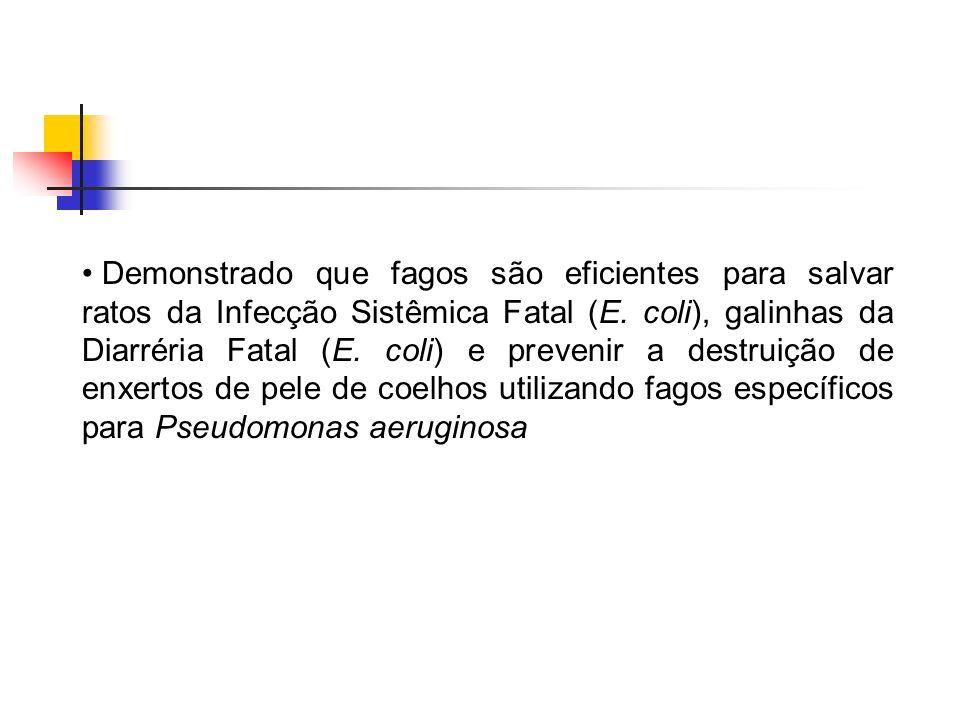 Demonstrado que fagos são eficientes para salvar ratos da Infecção Sistêmica Fatal (E.