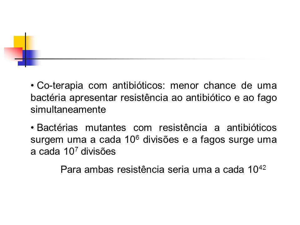 Co-terapia com antibióticos: menor chance de uma bactéria apresentar resistência ao antibiótico e ao fago simultaneamente