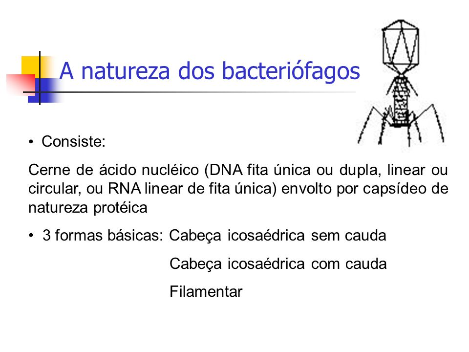 A natureza dos bacteriófagos