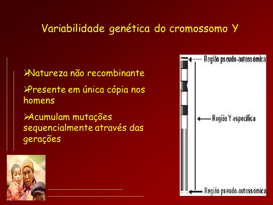 Variabilidade genética do cromossomo Y