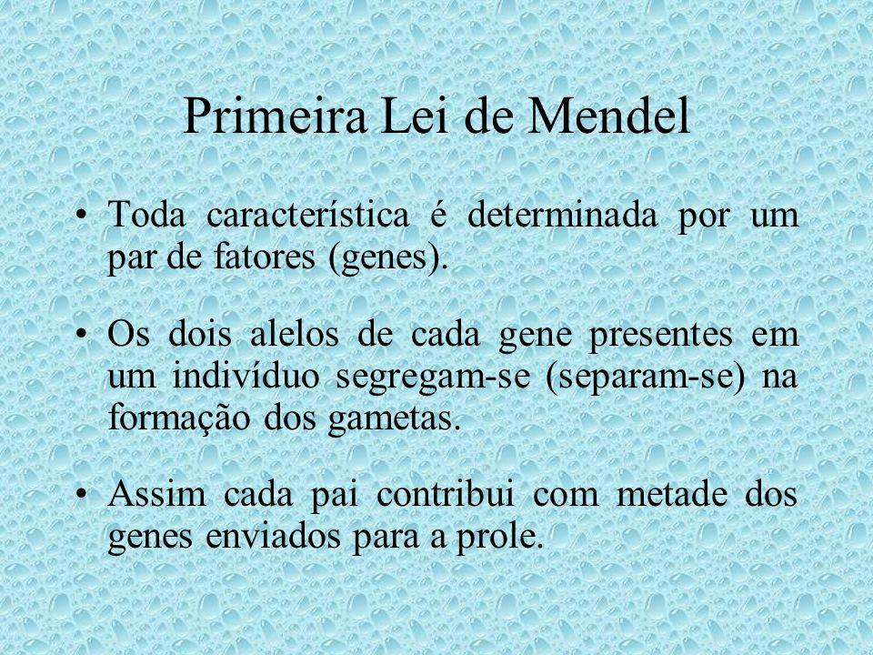 Primeira Lei de Mendel Toda característica é determinada por um par de fatores (genes).