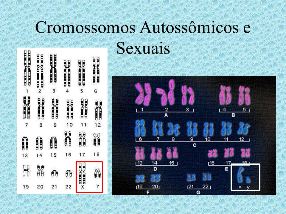 Cromossomos Autossômicos e Sexuais