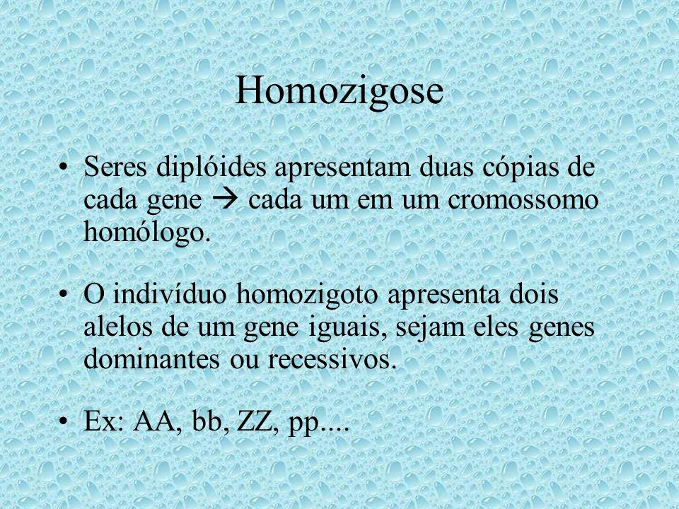 Homozigose Seres diplóides apresentam duas cópias de cada gene  cada um em um cromossomo homólogo.
