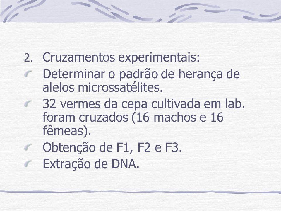 Cruzamentos experimentais: