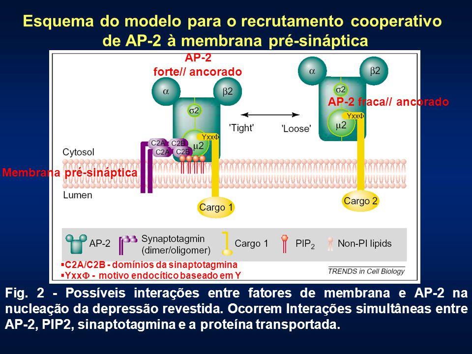 Esquema do modelo para o recrutamento cooperativo